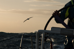 Leg 3, Cape Town to Melbourne, day 6, on board AkzoNobel. A large wandering Albatross. Photo by James Blake/Volvo Ocean Race. 15 December, 2017.
